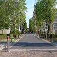 近所の並木道2