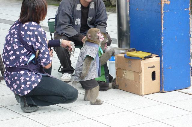 川崎大師で見た猿回し
